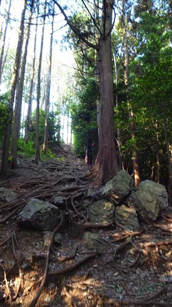 弓立山 登山 コース