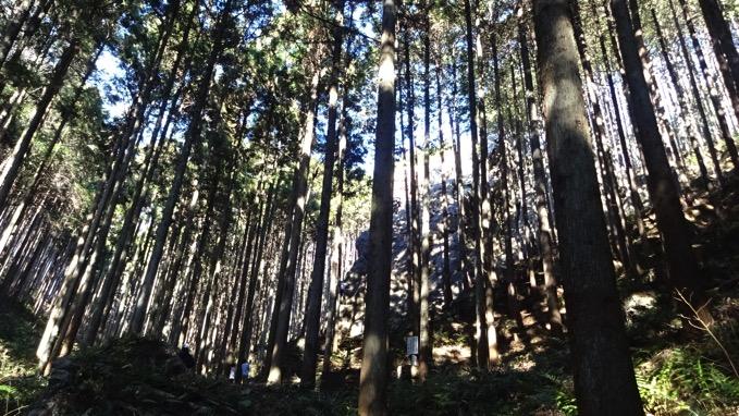 日和田山 ハイキング ロッククライミング コース