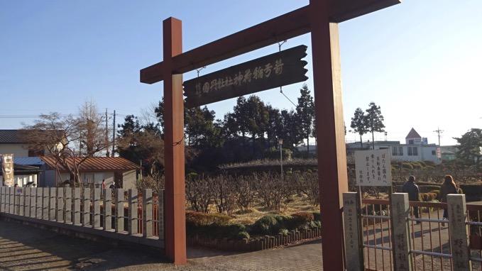 箭弓稲荷神社 牡丹園