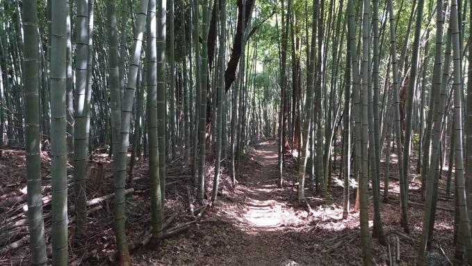 相模嵐山  登山竹林