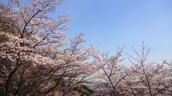 青梅丘陵ハイキング 桜