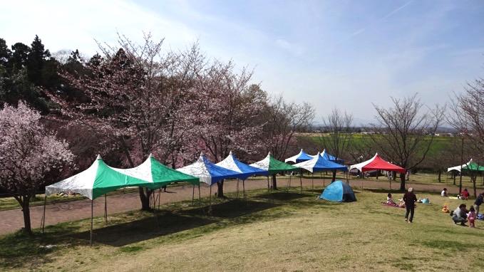 高尾さくら公園 お花見 北本市