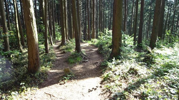 大高取山 登山道 ハイキングコース
