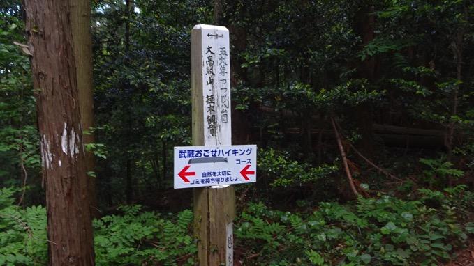大高取山 分岐 五大尊つつじ公園 ハイキングコース