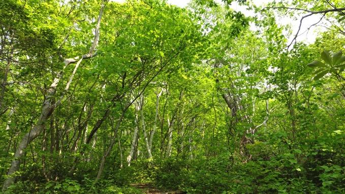 赤岩オタモイ線歩道 新緑