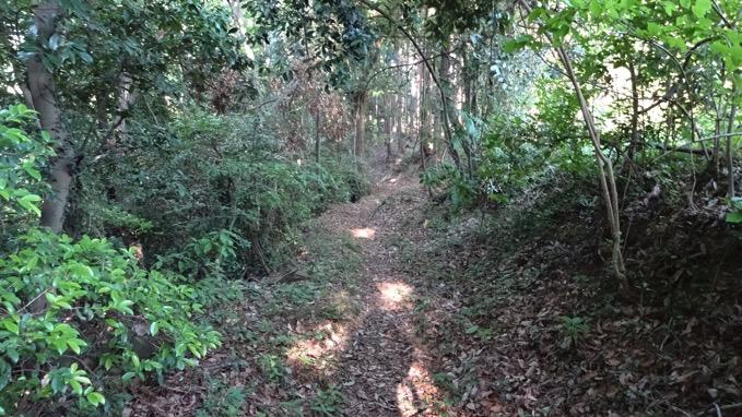 女鹿岩 林道