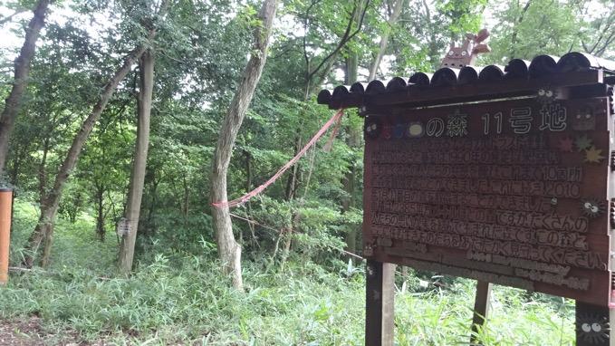 トトロの森11号地