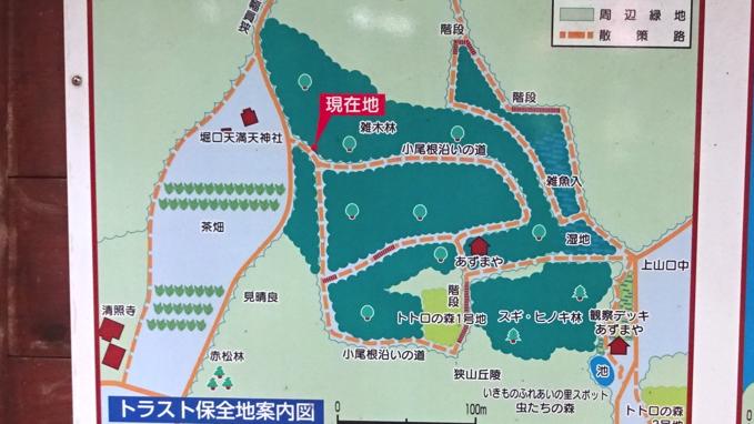 トトロの森1号地 地図