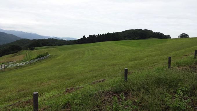 秩父高原牧場 自転車 ポピー畑