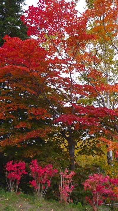 旭山記念公園 紅葉