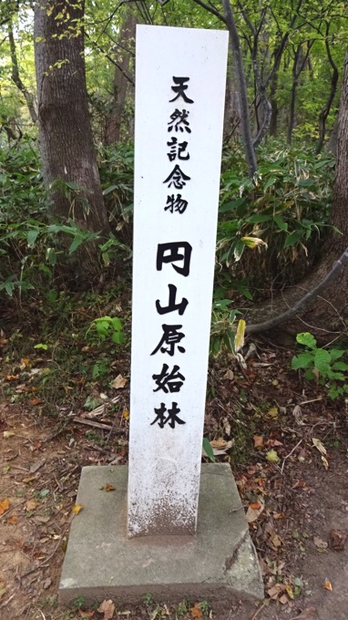 天然記念物 円山原始林 登山 ハイキング