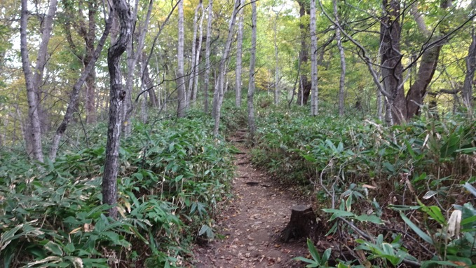 円山 登山道 ハイキング コース