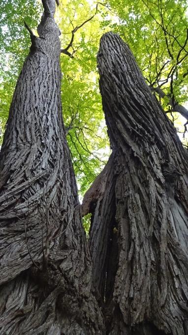 円山 登山 ハイキング 樹木