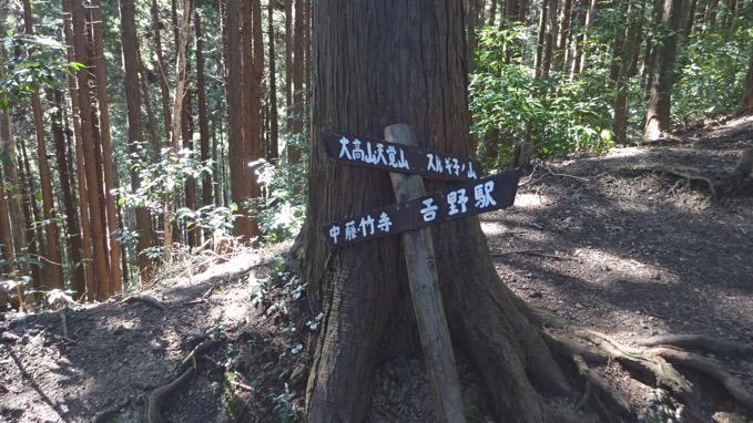 大高山 天覚山 登山 ルート