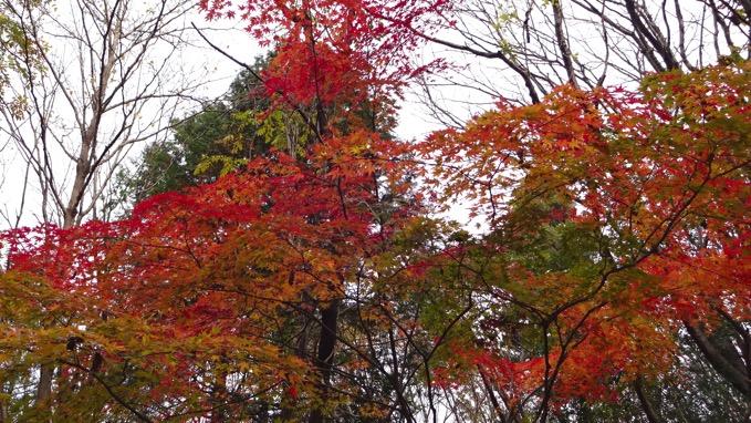 秋川丘陵ハイキング 紅葉