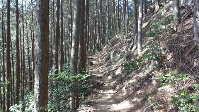 越上山 登山道