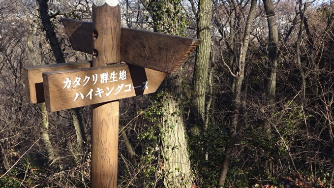 三毳山 ハイキング カタクリ群生地