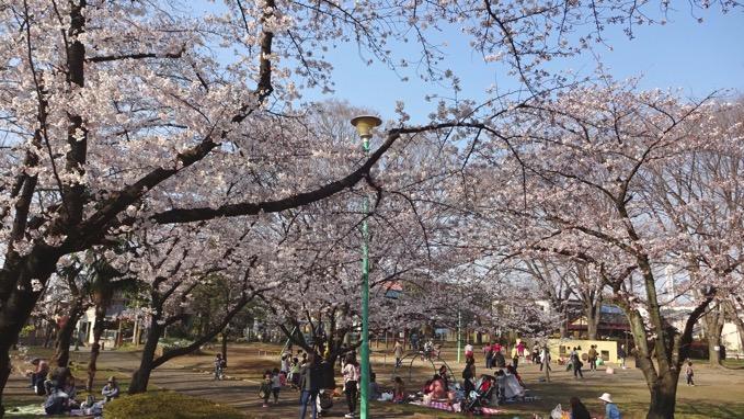 与野公園 桜