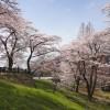 津久井城山に登山。湖畔の桜が満開で超綺麗![神奈川県相模原市]