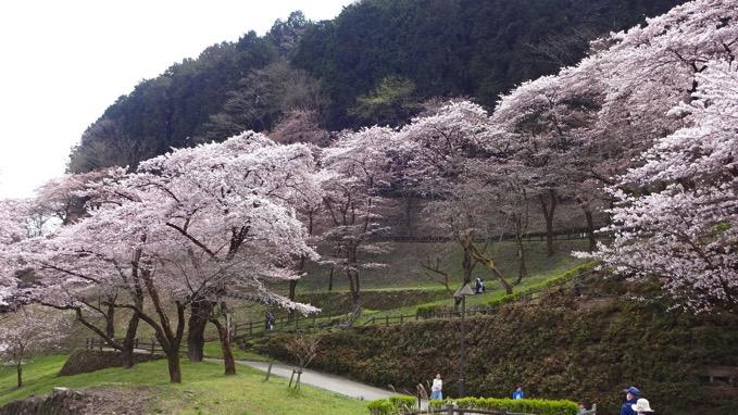 桜の小道 津久井城山ハイキング