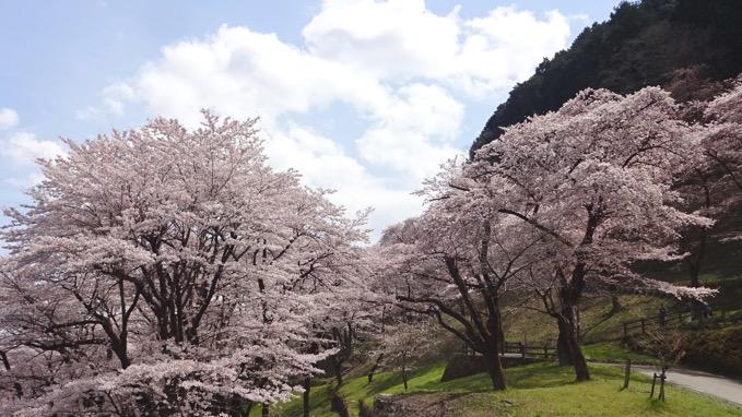 津久井城山ハイキング 桜