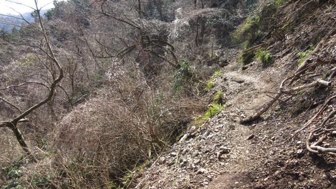 松田山ハイキング コース