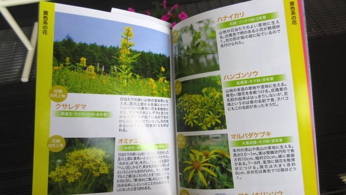 入笠山 花の宝庫