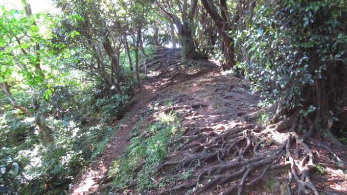 仙元山 ハイキングコース