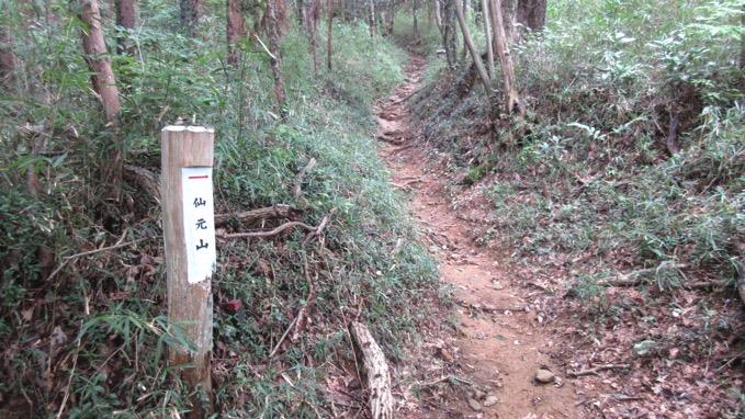 仙元山 ハイキング