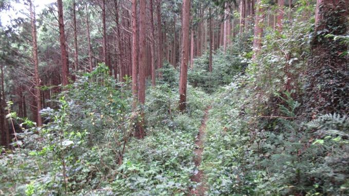 大高取山 ハイキング
