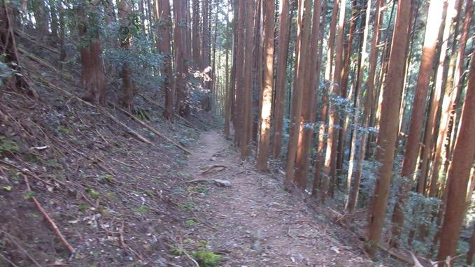 子ノ権現 ハイキングコース