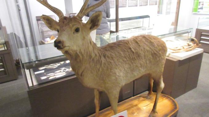 北海道大学総合博物館
