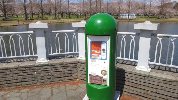 川越水上公園 桜